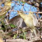 New migratory bird paper