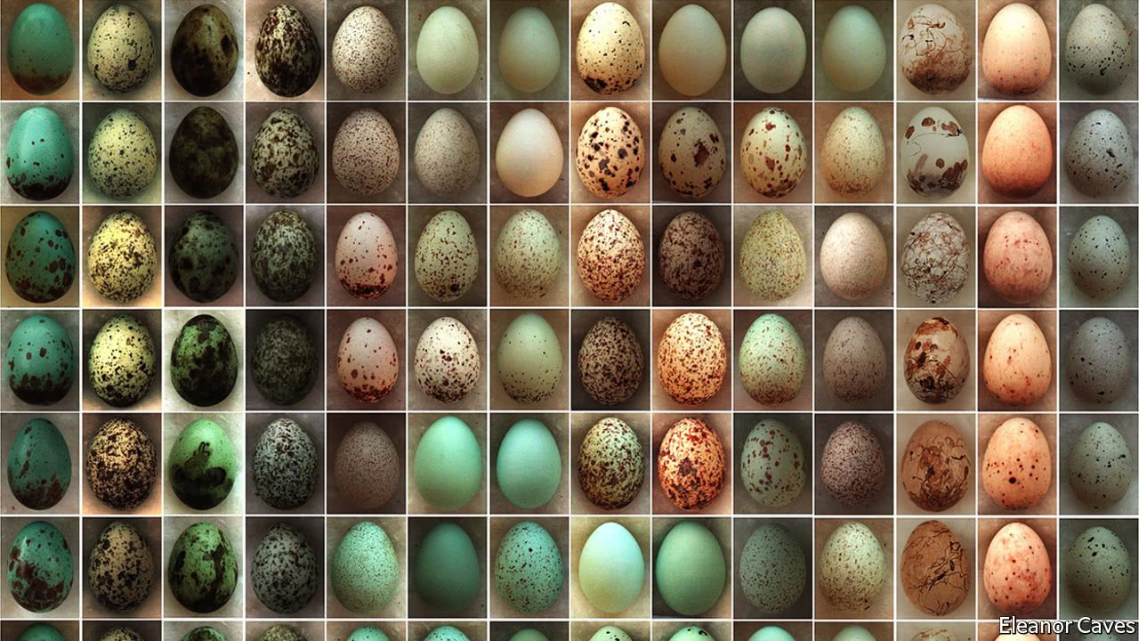 How multiple species affect each other's ever-evolving eggs