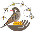 New project on honeyguide-human mutualism, with gratitude to the ERC
