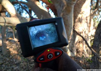 Endoscope down nest