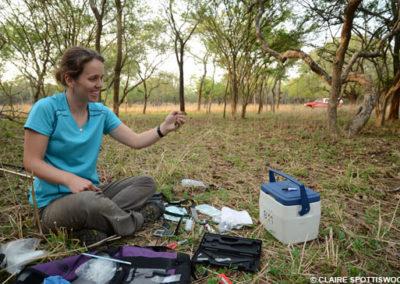 Marjorie Sorensen studies the Willow Warbler