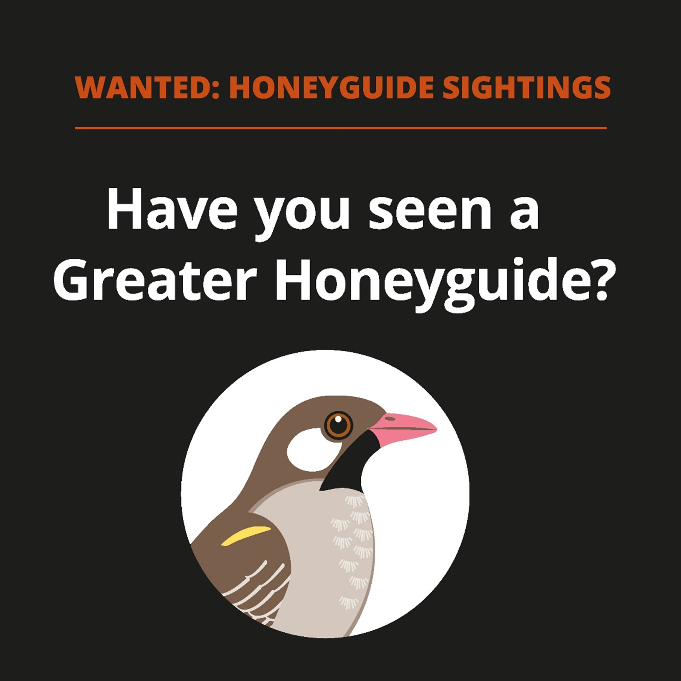 Launching Honeyguiding.me for all bird enthusiasts in Africa!