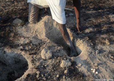 Aardvark hole - bee eater