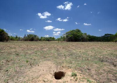 Aardvark hole