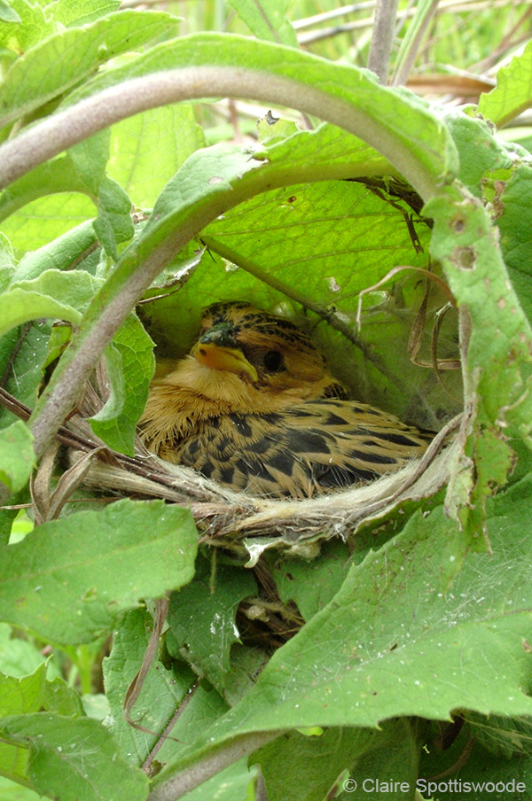 Nest Camouflage