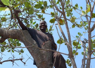 Greater Honeyguide hosts nest in tree holes
