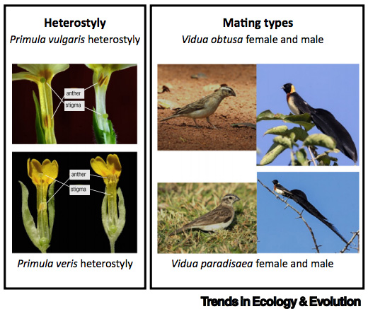 New review paper on polymorphisms and speciation