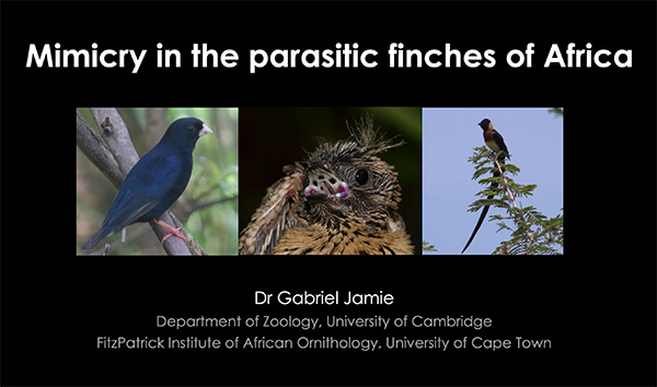 Dr Gabriel Jamie gives a talk on mimicry in parasitic finches at the African BirdFair