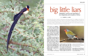 Front page image of the article for African Birdlife.